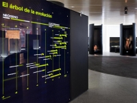 Proyecto Museos Evoluci